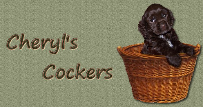 Cheryl's Cockers, cocker spaniel puppies for sale